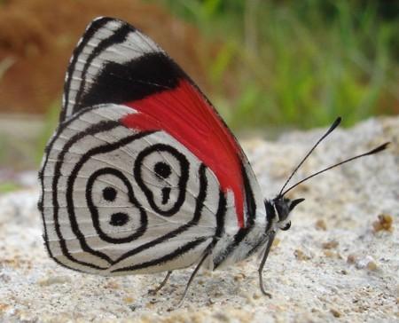 borboleta88